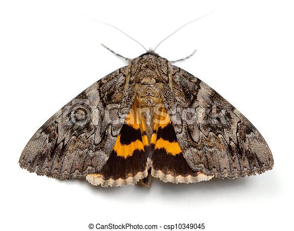 moth, underwing - csp10349045