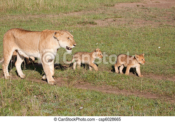 Mother And Cubs - csp6028665