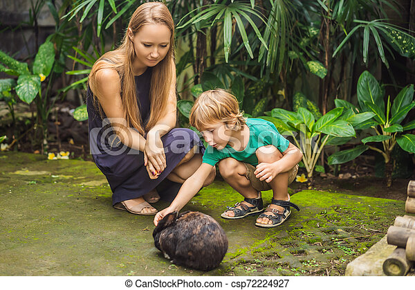 Mother and son feeds the rabbit. Cosmetics test on rabbit animal. Cruelty free and stop animal abuse concept - csp72224927