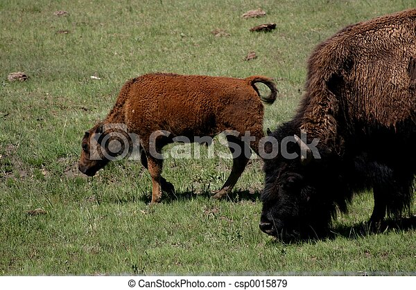 Mother & Baby - csp0015879