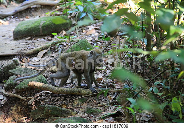 mother monkey with baby - csp11817009