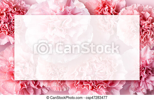 Mothers day concept of pink carnation flowers background with copy space - csp47283477