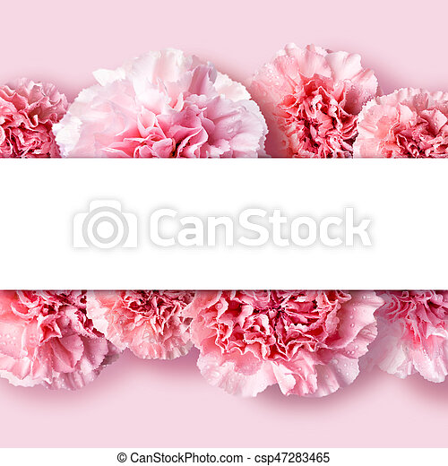 Mother's day concept of pink carnation flowers background with copy space - csp47283465