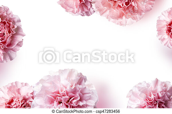 Mother's day concept of pink carnation flowers background with copy space - csp47283456