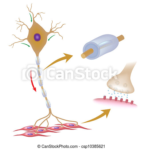 Motor neuron eps10 - csp10385621