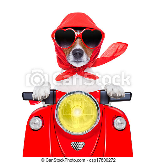motorcycle dog summer dog - csp17800272