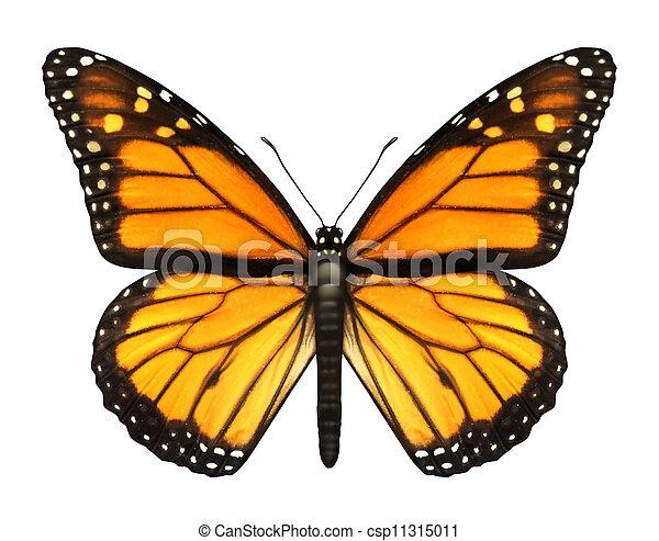 motyl, monarcha - csp11315011