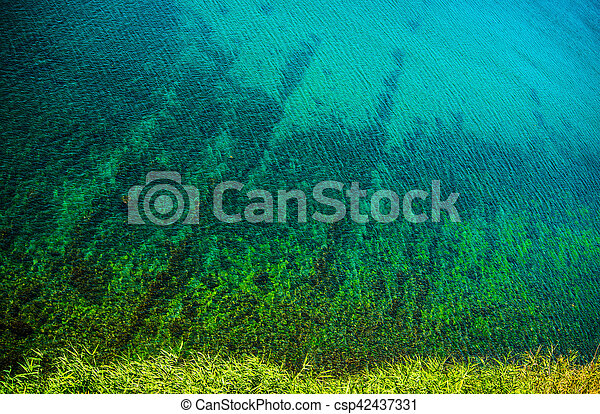 motyw morski - csp42437331