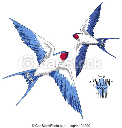 Mouche ciel ailes r aliste hirondelle oiseau - Oiseau mouche dessin ...