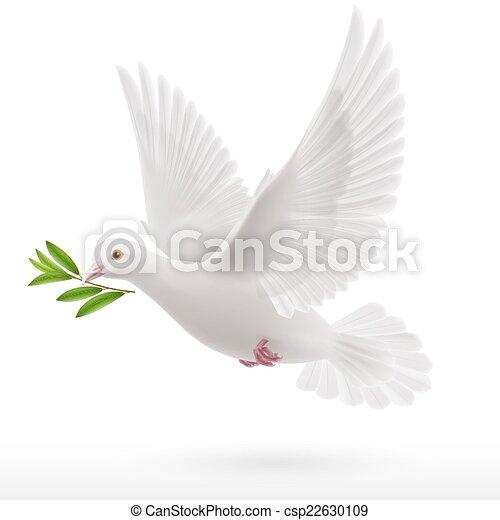 mouche, colombe - csp22630109