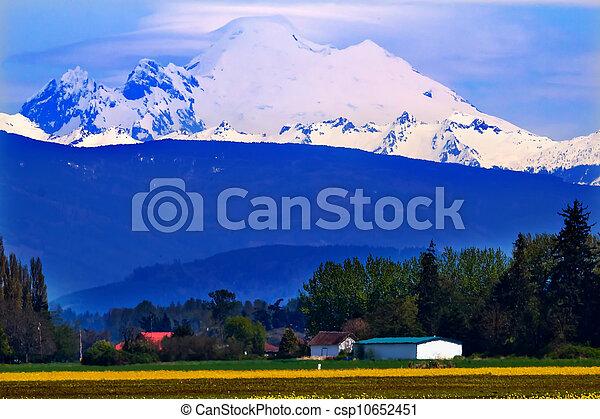 Mount Baker Skagit Valley Yellow Flowers Washington State - csp10652451