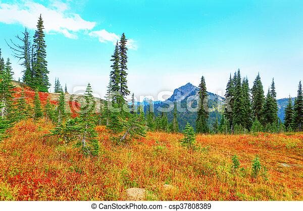 Mount Rainier, Washington - csp37808389