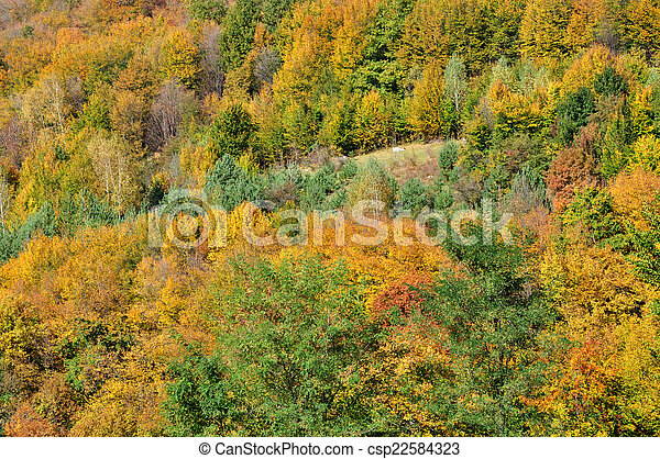 Mountain autumn landscape with colorful forest - csp22584323