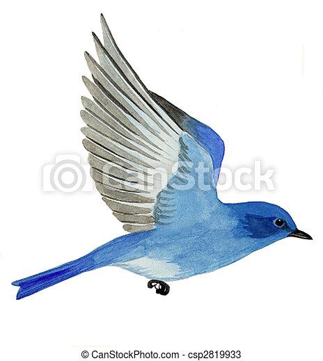Mountain Bluebird - csp2819933
