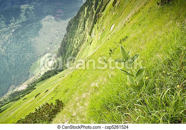 Mountain flora. - csp5261524