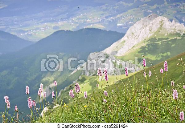 Mountain flowers. - csp5261424