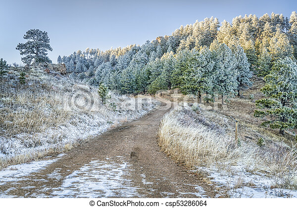 mountain forest road with pine trees covered by frost - csp53286064