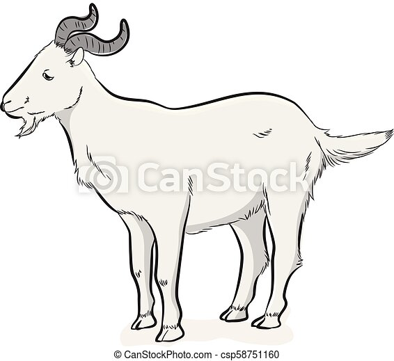 Mountain Goat Vector Illustration