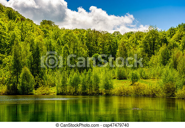mountain lake among the forest - csp47479740