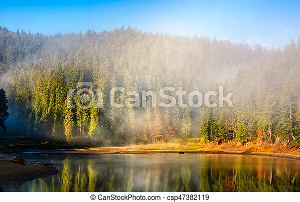 mountain lake on foggy morning in spruce forest - csp47382119