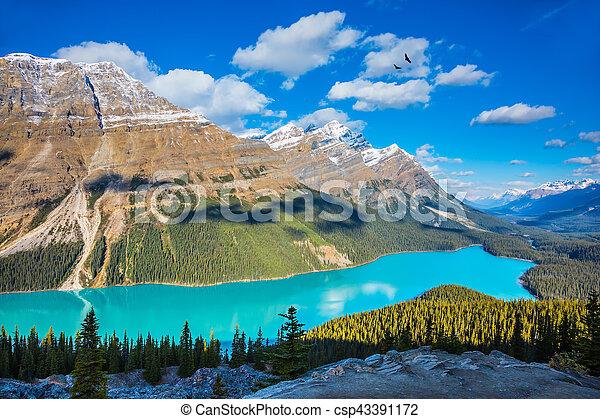 """Mountain Lake Peyto as a """"fox head"""" - csp43391172"""