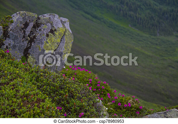 Mountain landscape with rhododendron flower - csp78980953
