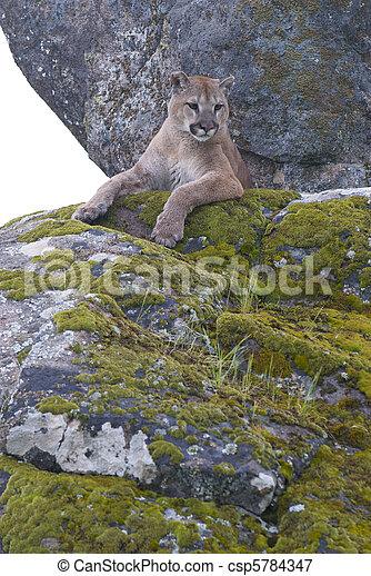 cougar i moss fraskilte kvinner fra rjukan som søker uforpliktende sex