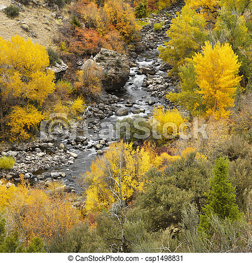 Mountain stream. - csp1498831