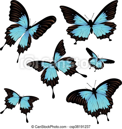 Mountain Swallowtail Set - csp38191237