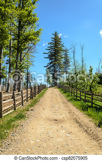 Mountain trail with trees - csp82075905