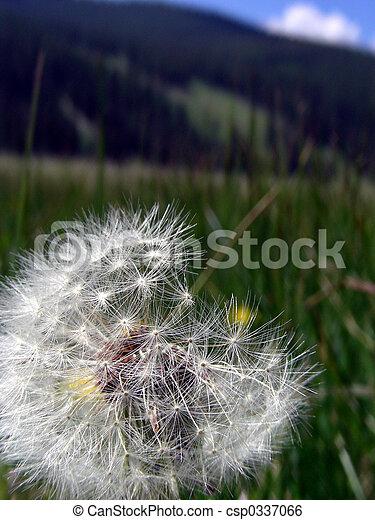 Mountain Weed - csp0337066