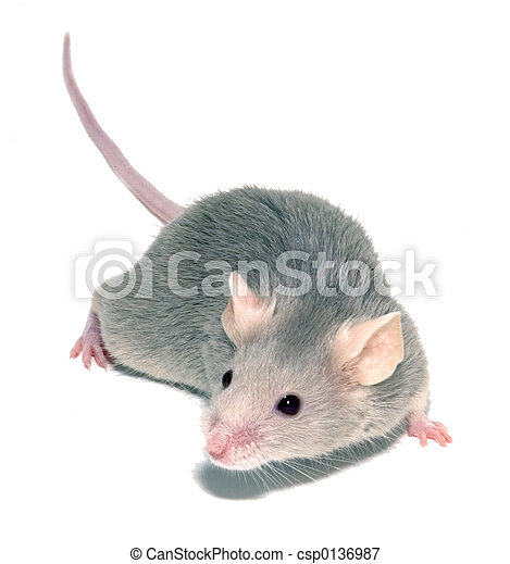 Mouse 3 - csp0136987