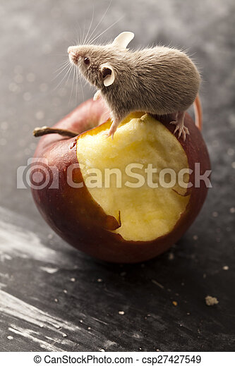 Mouse and apple, rural vivid colorful theme - csp27427549