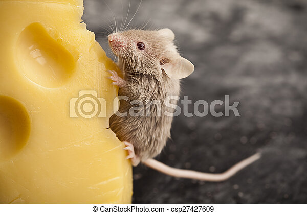 Mouse background, rural vivid colorful theme - csp27427609