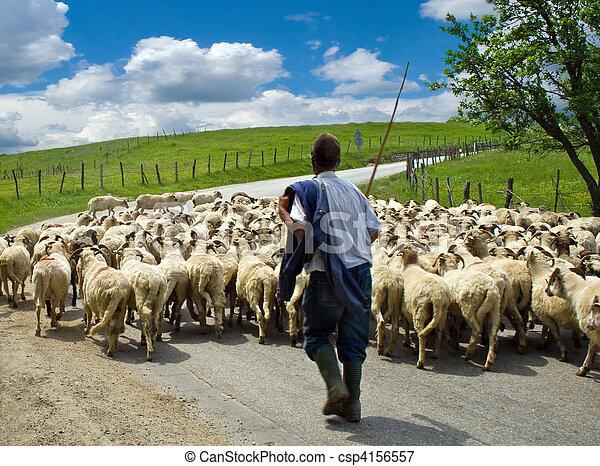 mouton, berger, sien, troupeau - csp4156557