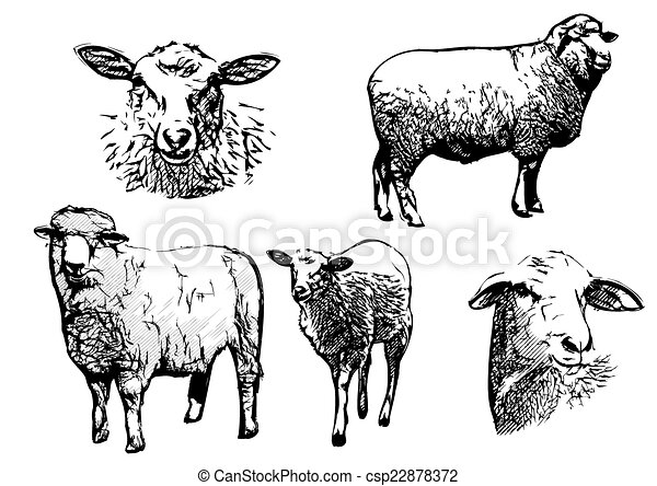 mouton, illustrations - csp22878372