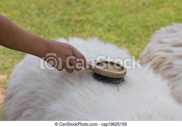 mouton laine brosse peigne brossage mouton usage images de stock rechercher des. Black Bedroom Furniture Sets. Home Design Ideas