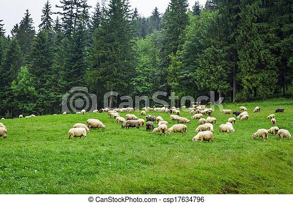 mouton, montagne, colline, troupeau - csp17634796