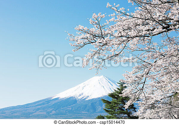 Mt  Fuji with cherry blossom - csp15014470