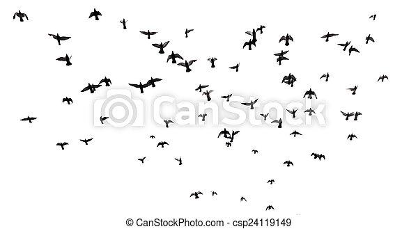 Muchos pájaros volando en el cielo - csp24119149