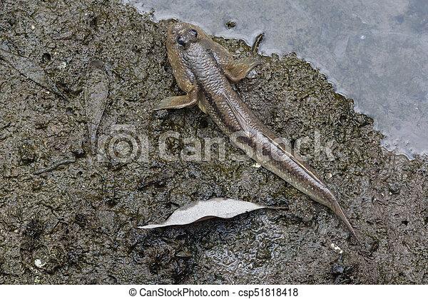 Mudskipper fish on the land - csp51818418