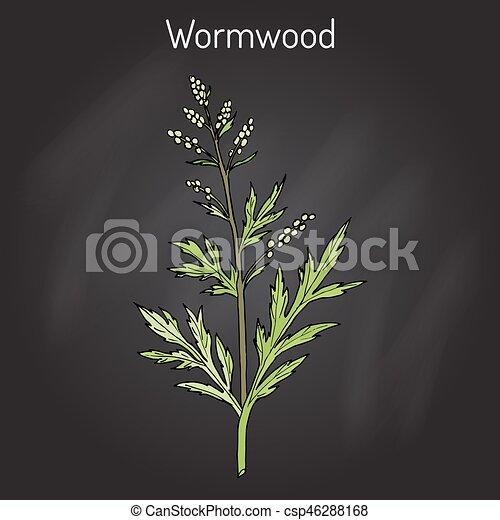 Mugwort Or Common Wormwood Artemisia Vulgaris Medicinal Plant