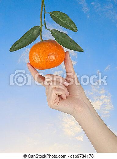 Mujer sosteniendo mandarina madura - csp9734178