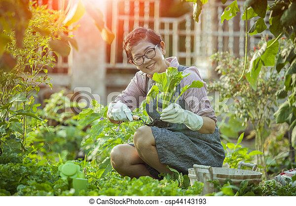 0f53e09fc mujer, orgánico, jardín, relajante, verdura asiática, hogar, cosechar -  csp44143193