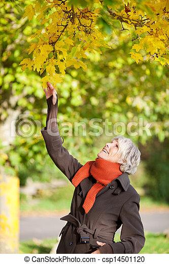 La anciana sonriente con una rama de árbol - csp14501120