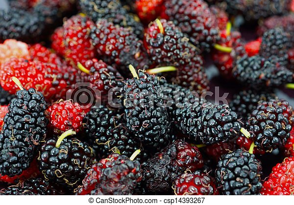 Mulberry on white background. - csp14393267