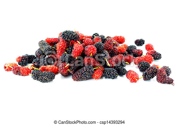 Mulberry on white background. - csp14393294