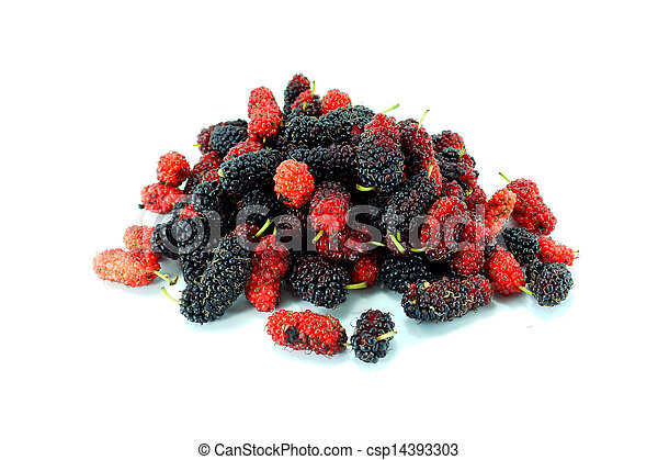 Mulberry on white background. - csp14393303