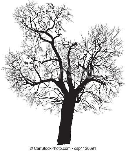 Mulberry tree vector - csp4138691