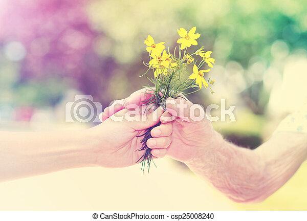 mulher, jovem, idoso, exterior, segurar floresce - csp25008240